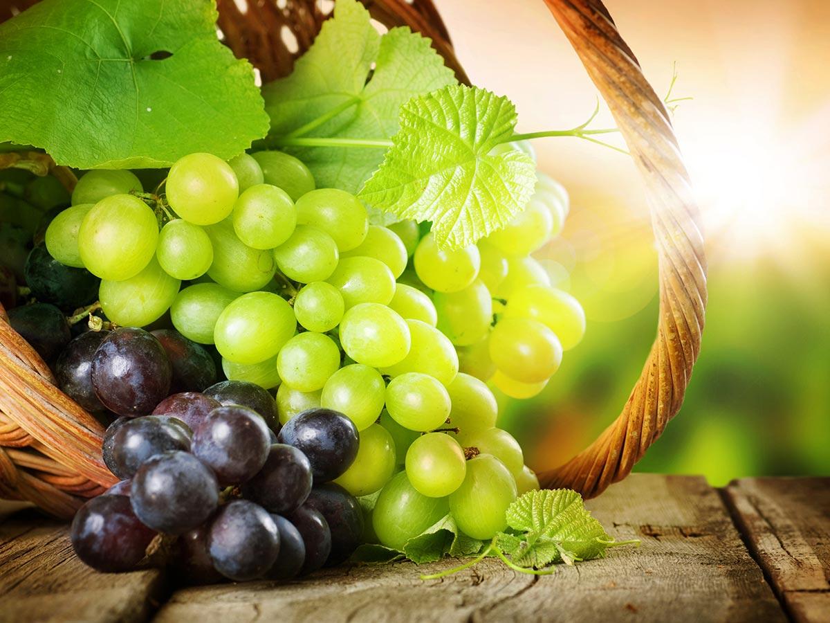 Rovinjski vinari ostvarili zapaženi uspjeh na ovogodišnjoj Vinistri