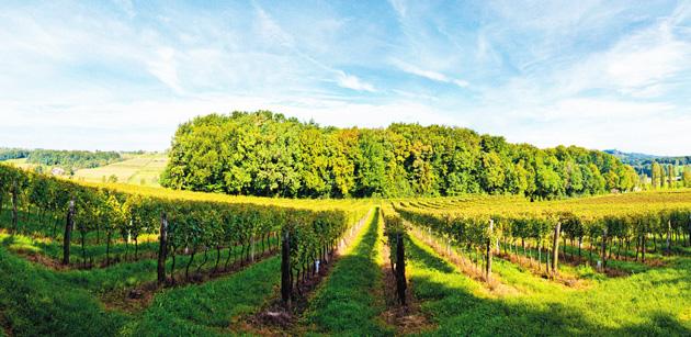 Avviso ai viticultori