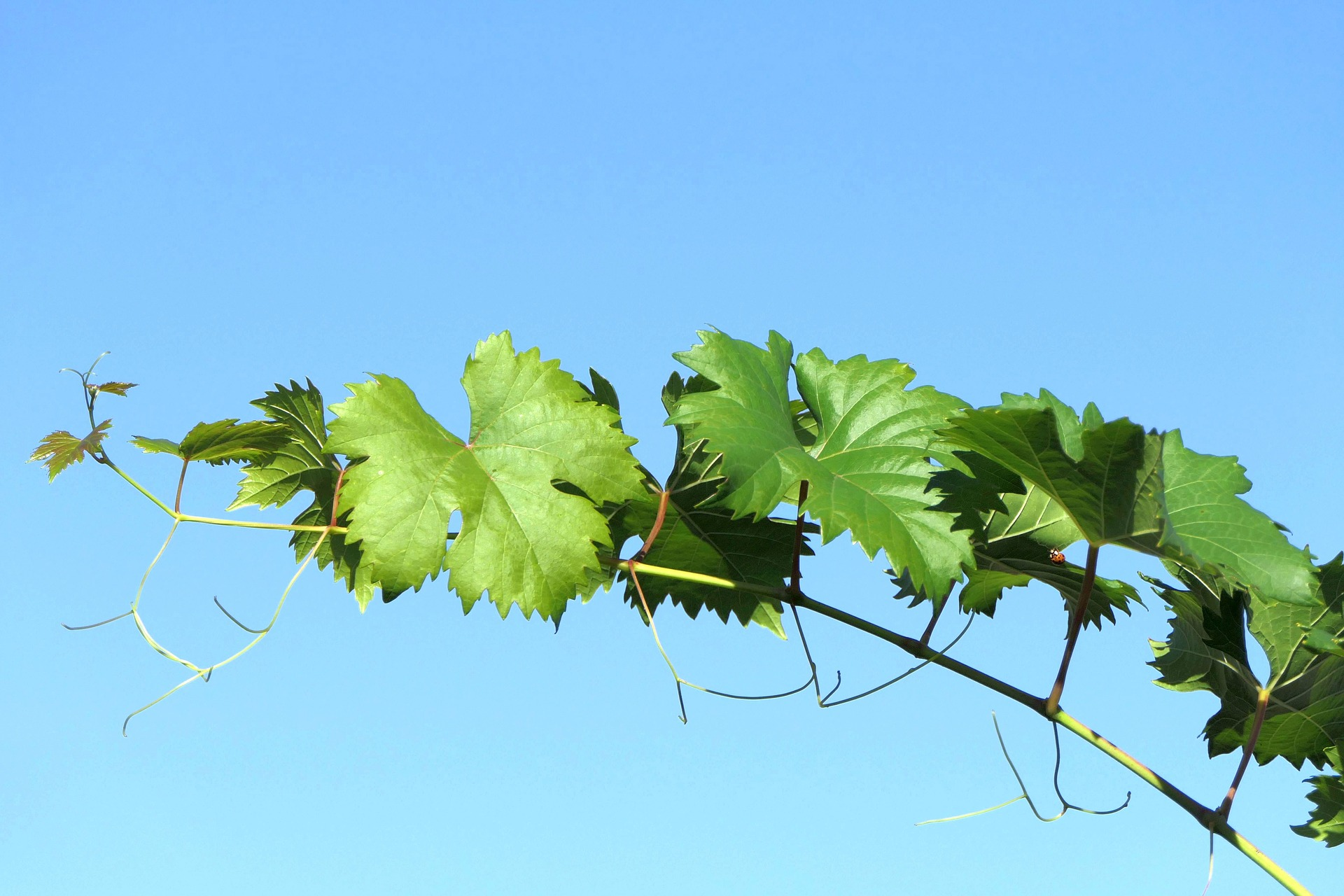Avviso ai viticoltori