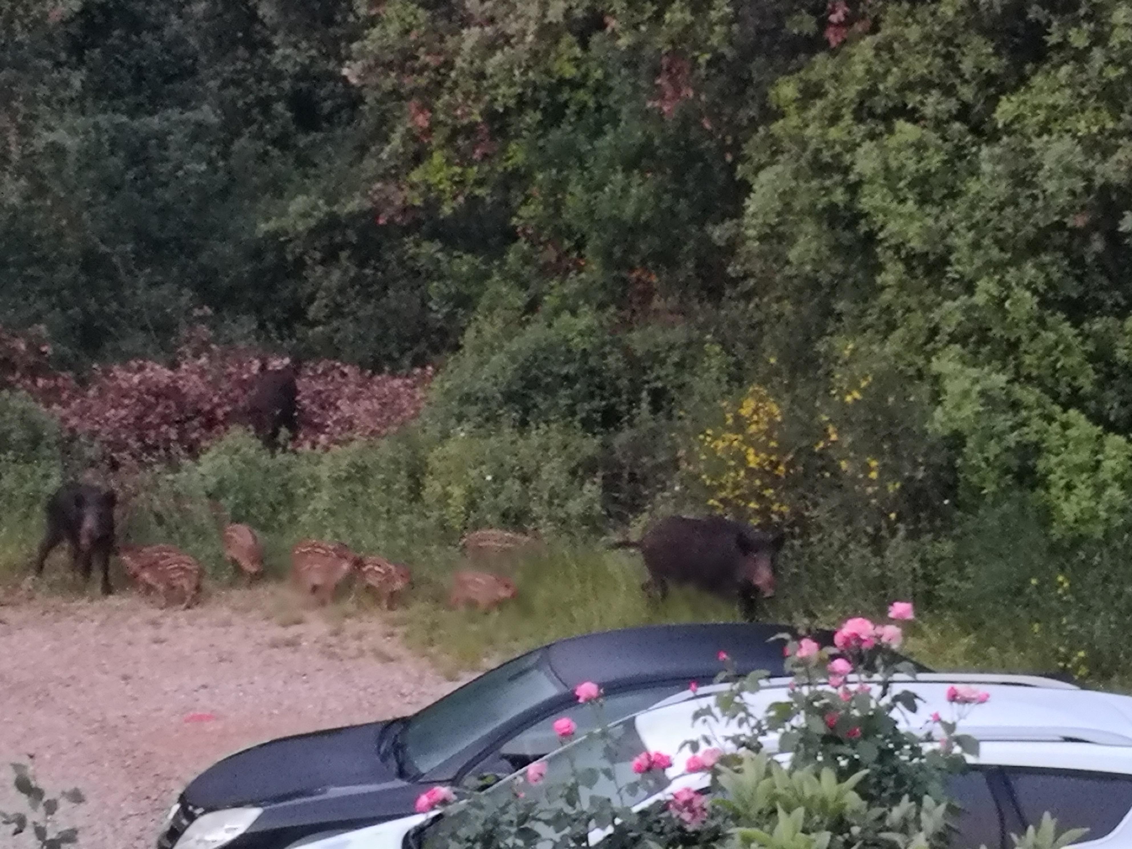 A breve il Programma di tutela dalla selvaggina al di fuori del terreno di caccia