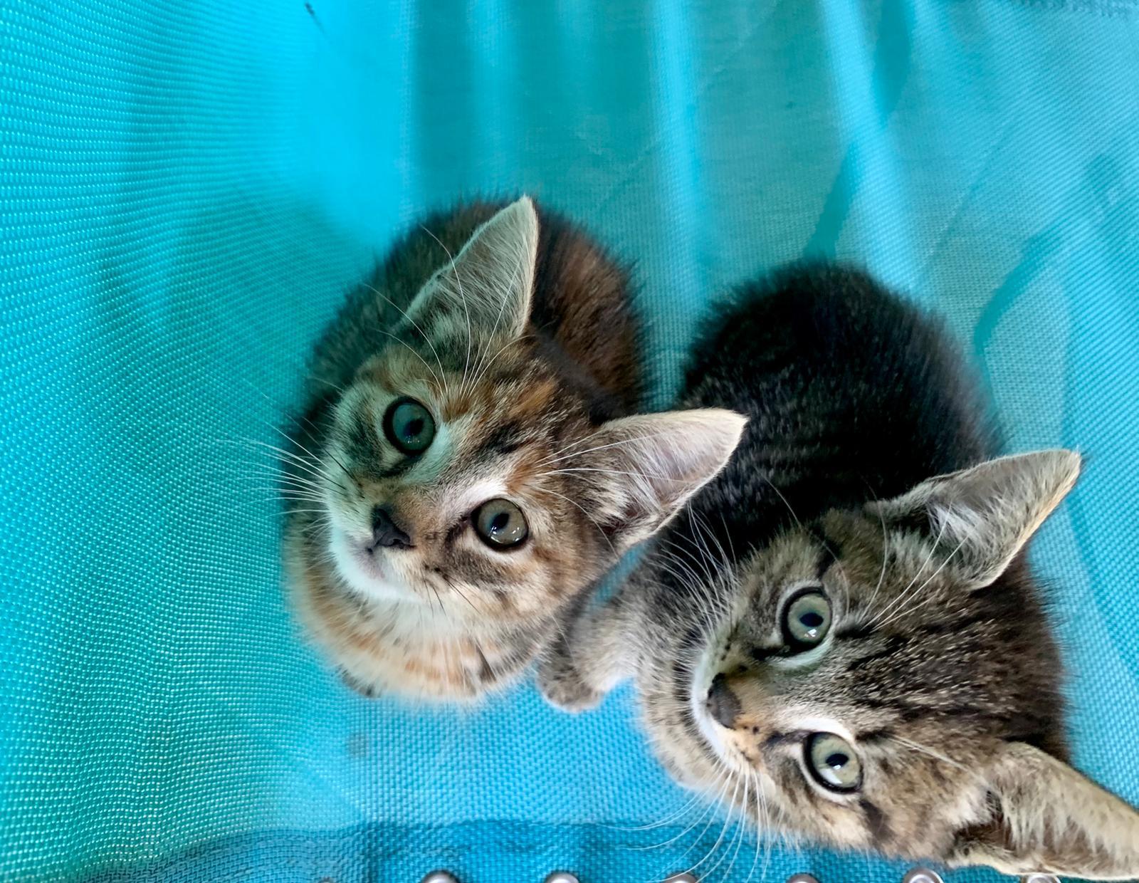 Da oggi l'azione di sterilizzazione dei gatti