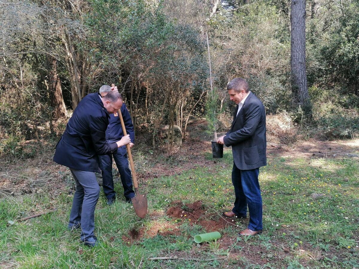 A Cuvi sono stati piantati 30 alberelli di pino e cipresso - glavna fotografija