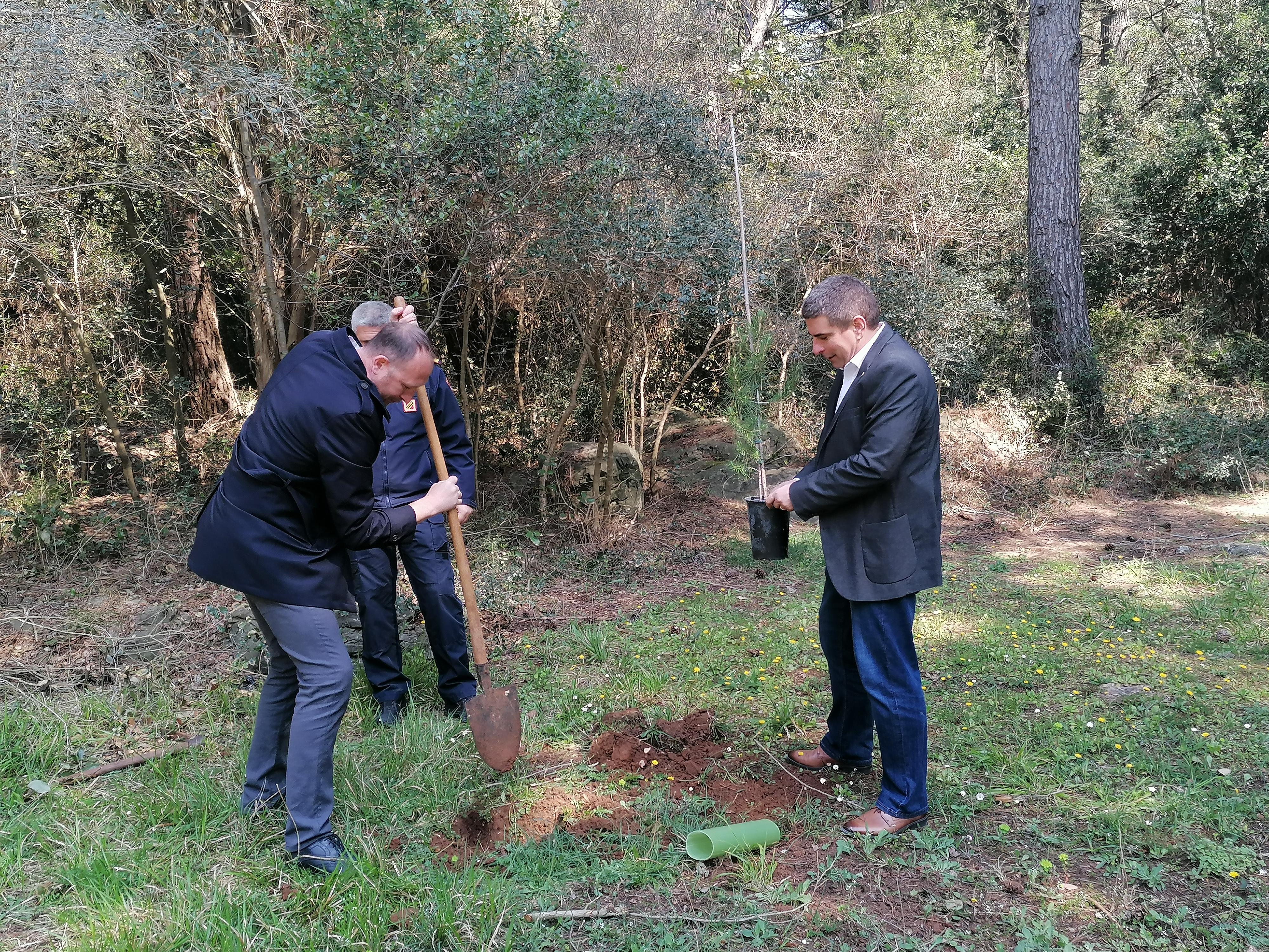 A Cuvi sono stati piantati 30 alberelli di pino e cipresso