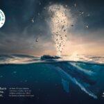 Europska ekološka nagrada za Studio Tumpić/Prenc i aMore festival 1