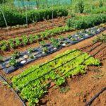 Gradski vrtovi obogaćeni novim posjednicima 9