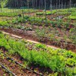 Gradski vrtovi obogaćeni novim posjednicima 8