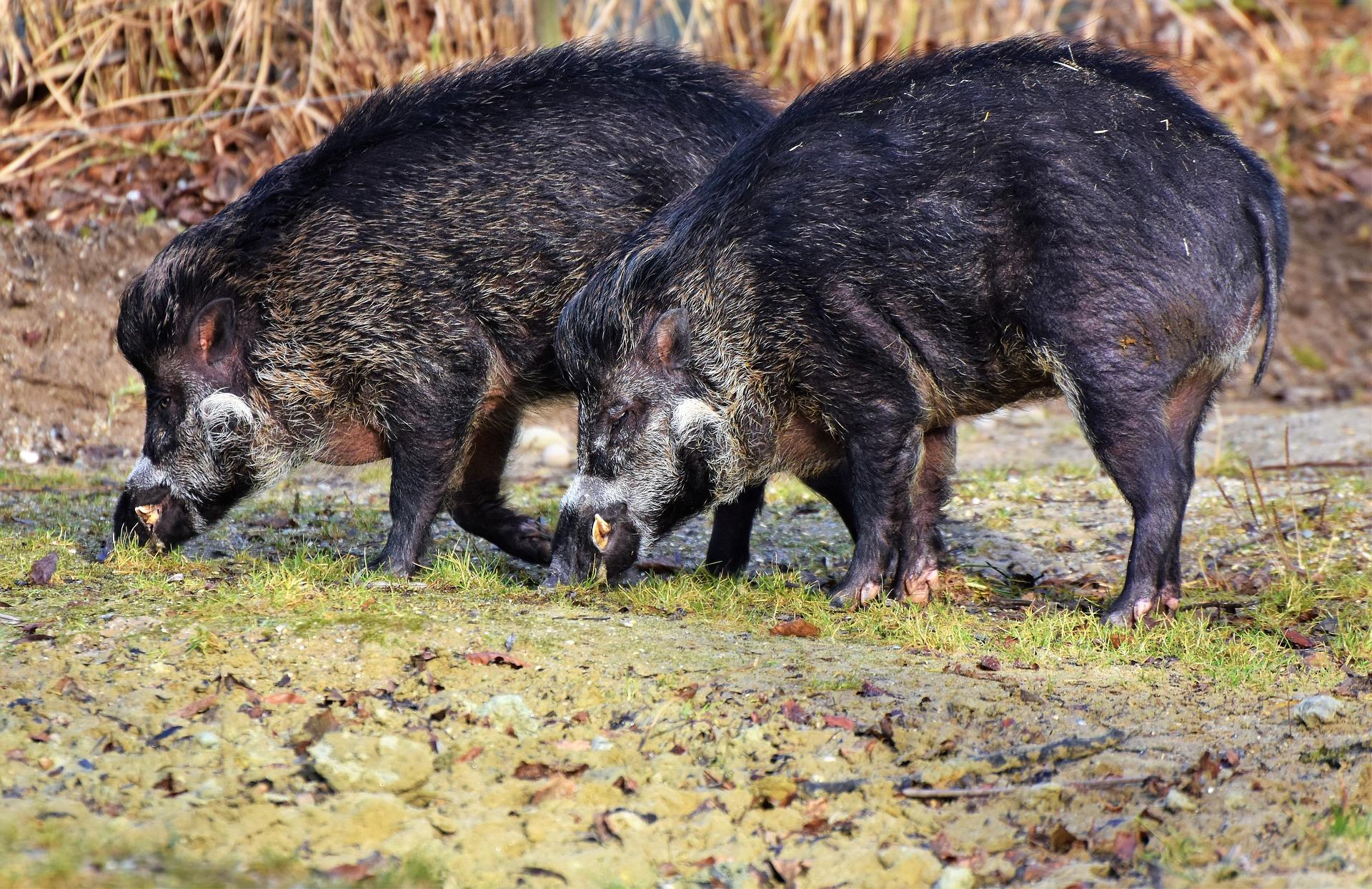 Uspješno provedena prva akcija Programa zaštite divljači